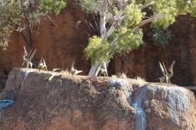 Pterosaurs nesting