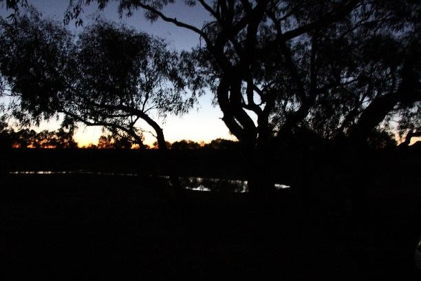Sunset, when the wildlife really start arriving.