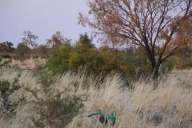 Bad bird photography part 2