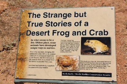 This desert has crabs... and frogs.