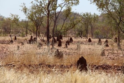 Naked termite mounds. Avert your eyes. (See Winton post if you don't get the reference.)