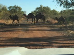 Move along, camels, we've got places to be