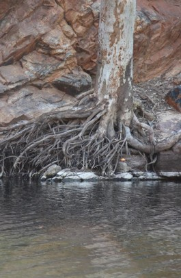 Loved this tree clinging like a six year old afraid of the cold water.