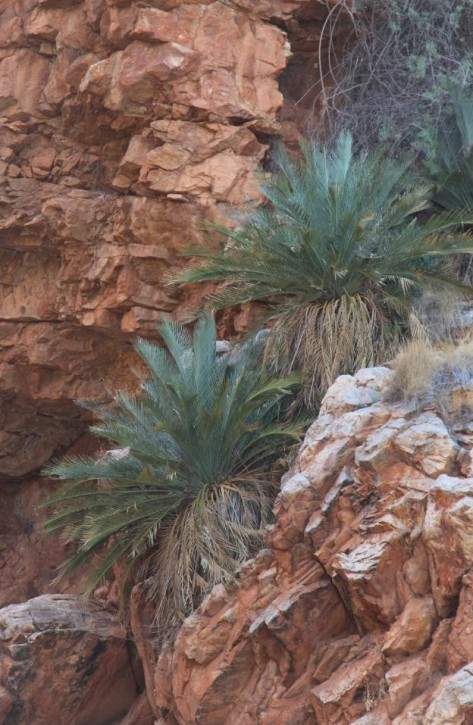 Cycads grow in crevices up the cliff walls. It all feels a bit prehistoric, till you turn around and see the old lifesaver ring for rescuing swimmers.