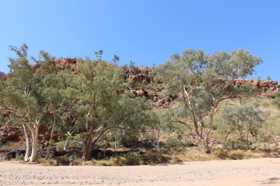 White sandy beach in the middle of the red centre, who'd have thought.